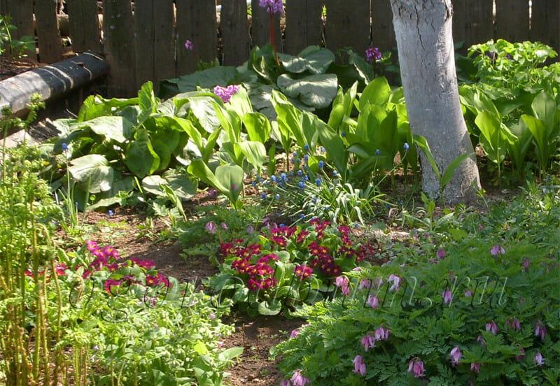 Полутень для комфортного роста первоцвета