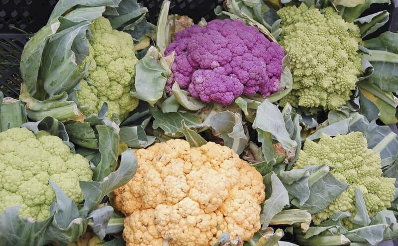 технология выращивания цветной капусты