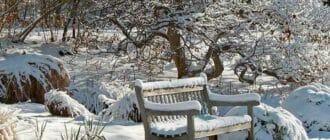 Зимний сад и работы по календарю на декабрь 2016 года