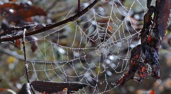 Осенние листья в саду и работы по лунному календарю в ноябре