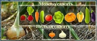овощи после лука