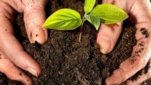 Главное - здоровая почва