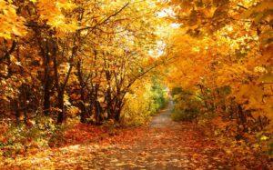 Народный календарь: 13-19 октября