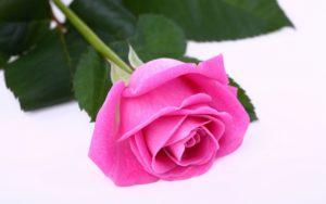 Какие садовые цветы самые популярные?