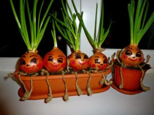 Как вырастить зеленый лук на подоконнике