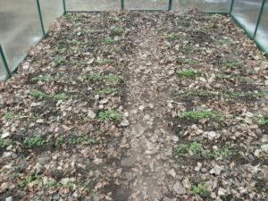 Какие сидераты лучше сеять в теплице осенью