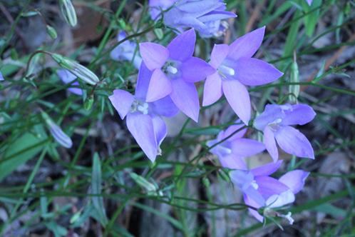 5 видов Валенбергии: Секреты выращивания