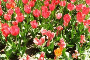 Какие есть неприхотливые цветы для дачи - советы начинающим садоводам