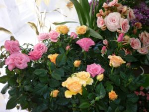 Дыхание роз