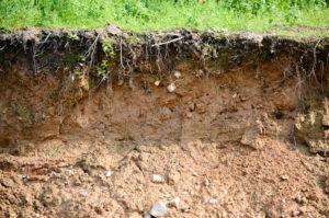 Составляющие почвы