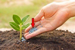 Помощь вашему саду