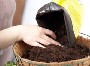 Какая почва в моем саду