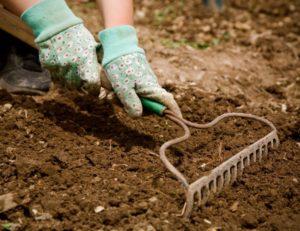 Традиционное выращивание и сбор урожая