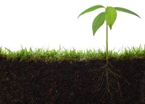 Подсказка от растений