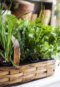 Выращивайте травы с удовольствием