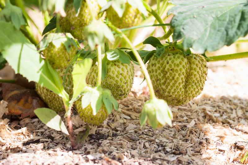 Опилки для большого урожая