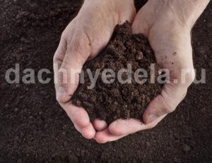 Как оздоровить и реанимировать почву