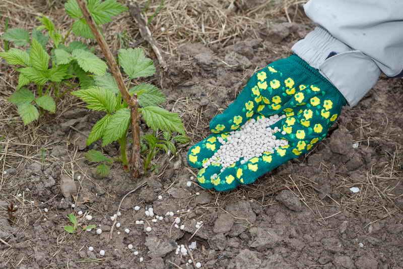 Подкормка малины весной, ягода на загляденье