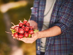Четыре основных секрета выращивания редиса