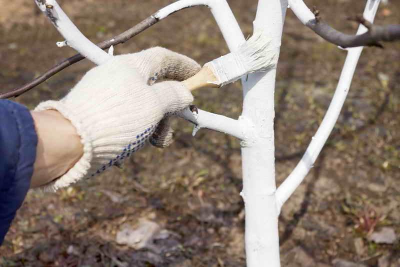 9 полезных советов по уходу и лечению деревьев