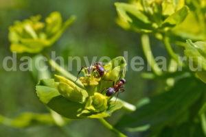 Четыре обязательных весенних обработки сада от болезней и вредителей