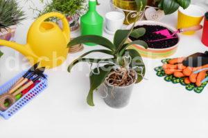 Как реанимировать орхидею