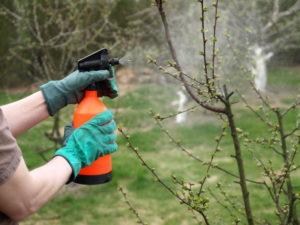 Защищаем деревья от муравьев