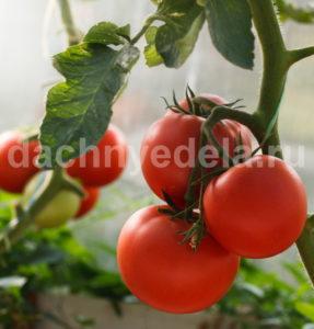 Народные рецепты удобрений для томатов (проверенные составы)