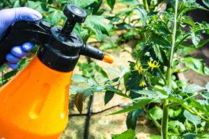5 способов применения перекиси водорода на огороде