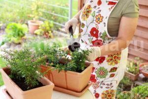 6 лучших органических удобрений для цветника