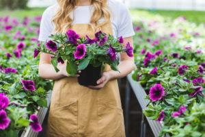Секреты обильного цветения петуний