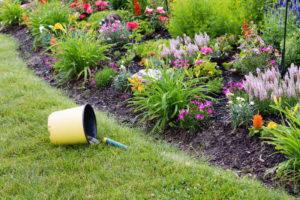В августе можно собирать семена цветов и заносить в дом комнатные цветы