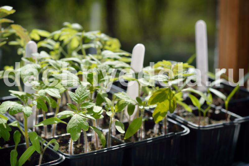 Какие семена томатов выбрать на будущий сезон?