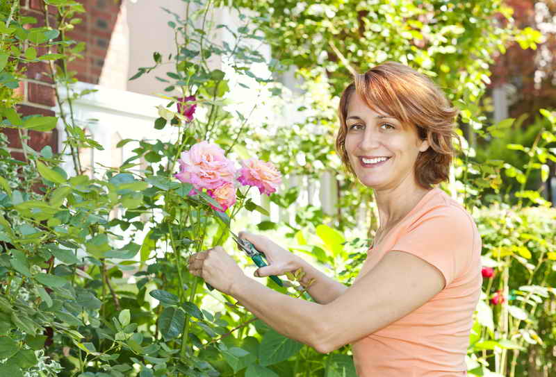 Как правильно ухаживать за розами осенью