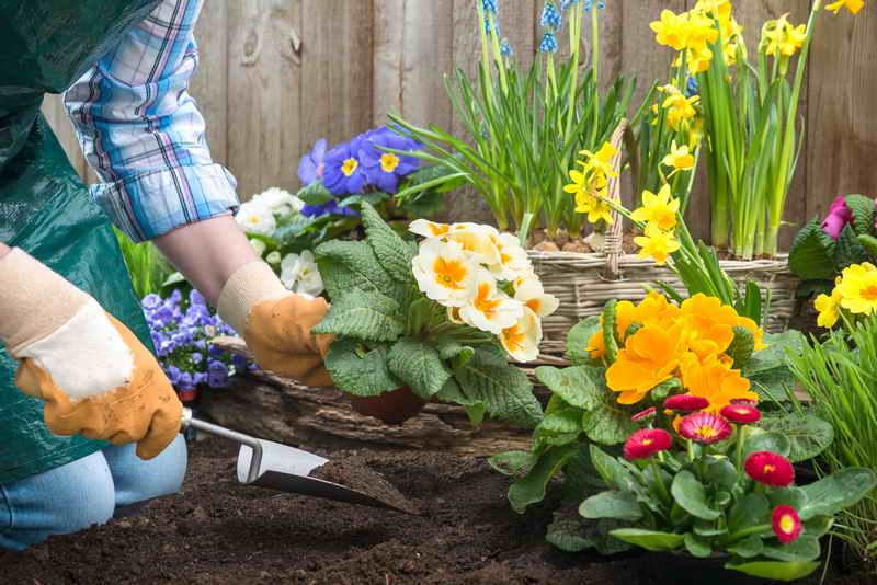 Какие продукты могут пригодиться в огороде