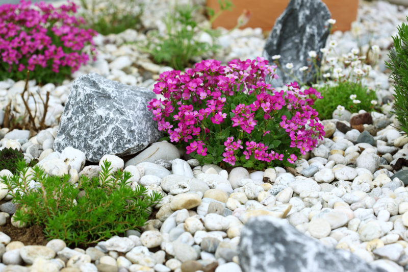 Низкорослые растения для альпийской горки и рокария