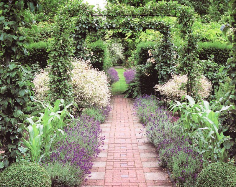 Декор участка — бордюры из пряных трав
