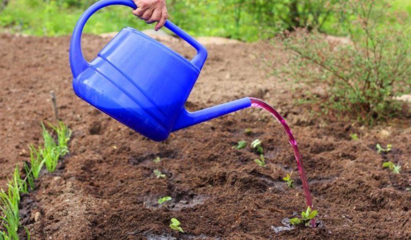 Марганцовка: способы применения в саду, огороде и цветнике