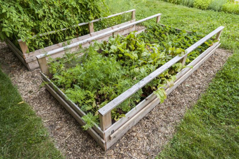 Овощи растущие в тени и полутени