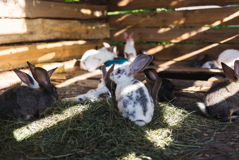 Как собственными руками сделать недорогие клетки для кроликов: простые и удобные