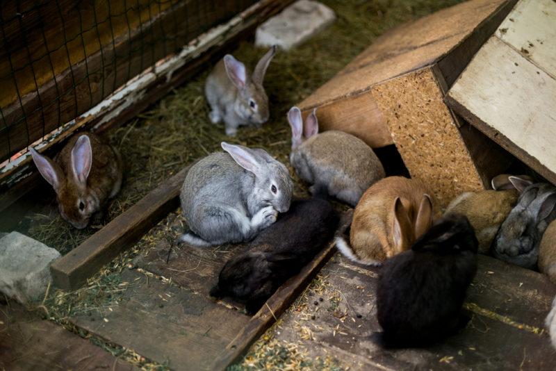 Клички для кролей и крольчих