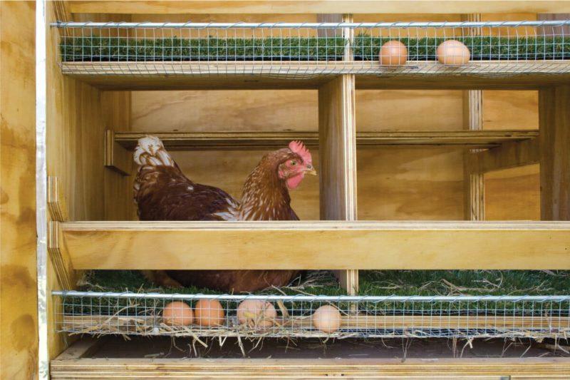 Для чего несушке гнездо в курятнике