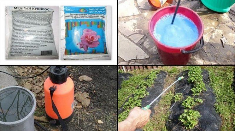 Для чего используется медный купорос на огороде, и чего нужно опасаться при его применении