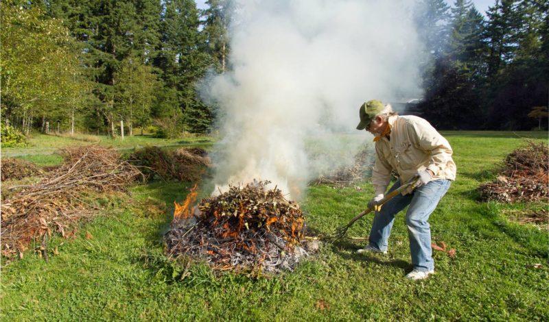 Правила заготовки древесной золы, нарушение которых нанесет вред саду и огороду