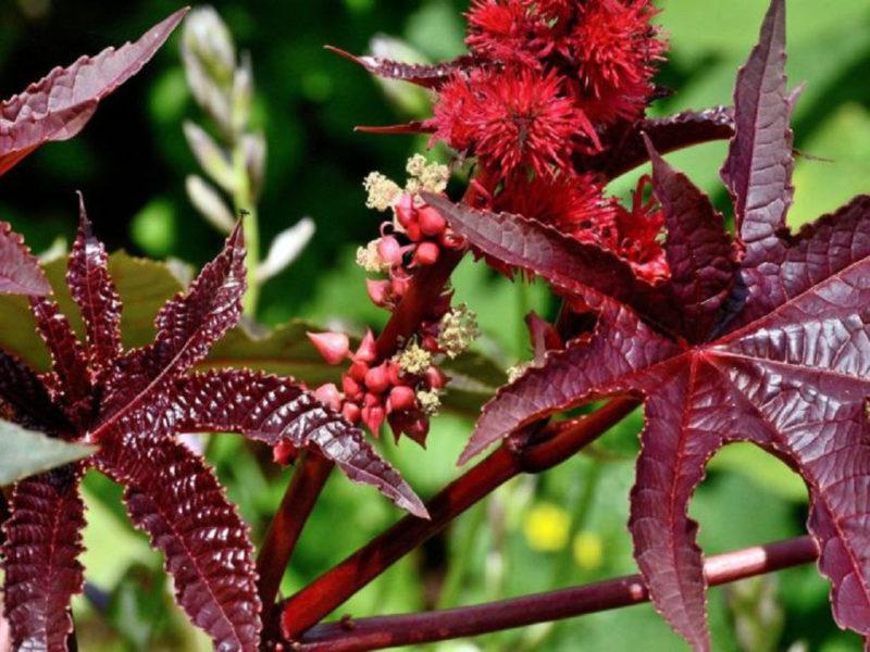 Худшие цветы для дачи: ТОП-5 растений, которые лучше не сажать на участке
