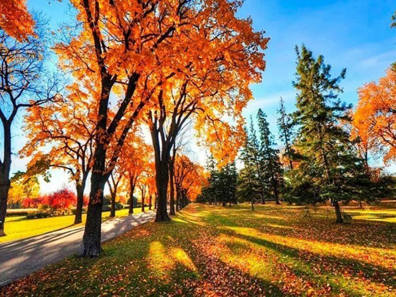 Погода в октябре 2020: каким будет второй месяц осени