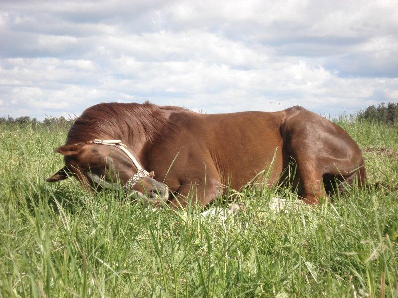 Особенности сна лошадей