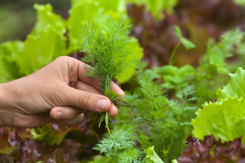 Растения, которым противопоказано окучивание