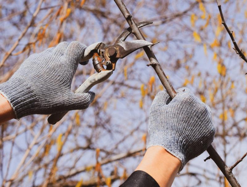 Сроки и приемы обрезки плодовых деревьев — мнение профессионалов