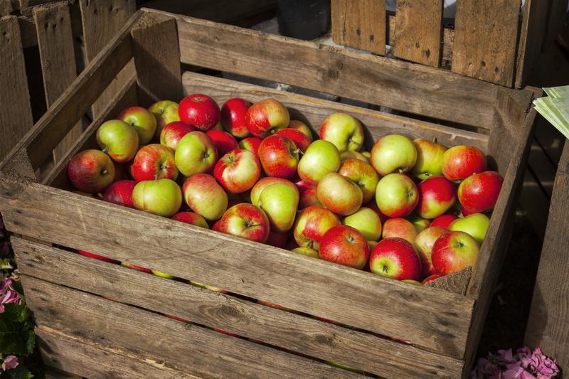 Богатый урожай яблок с помощью ржавого гвоздя. Старый способ заставить яблоню плодоносить